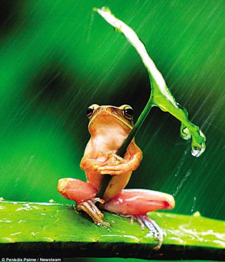 小图青蛙抱着的树叶与大图的树叶并不是同一片树叶。